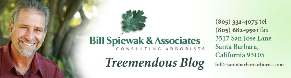 Treemendous Blog