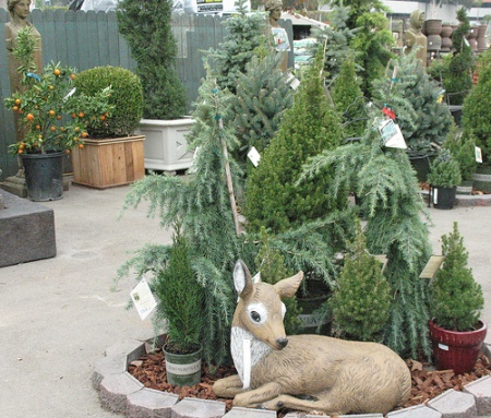 An assortment of live trees to choose from, but which is best?