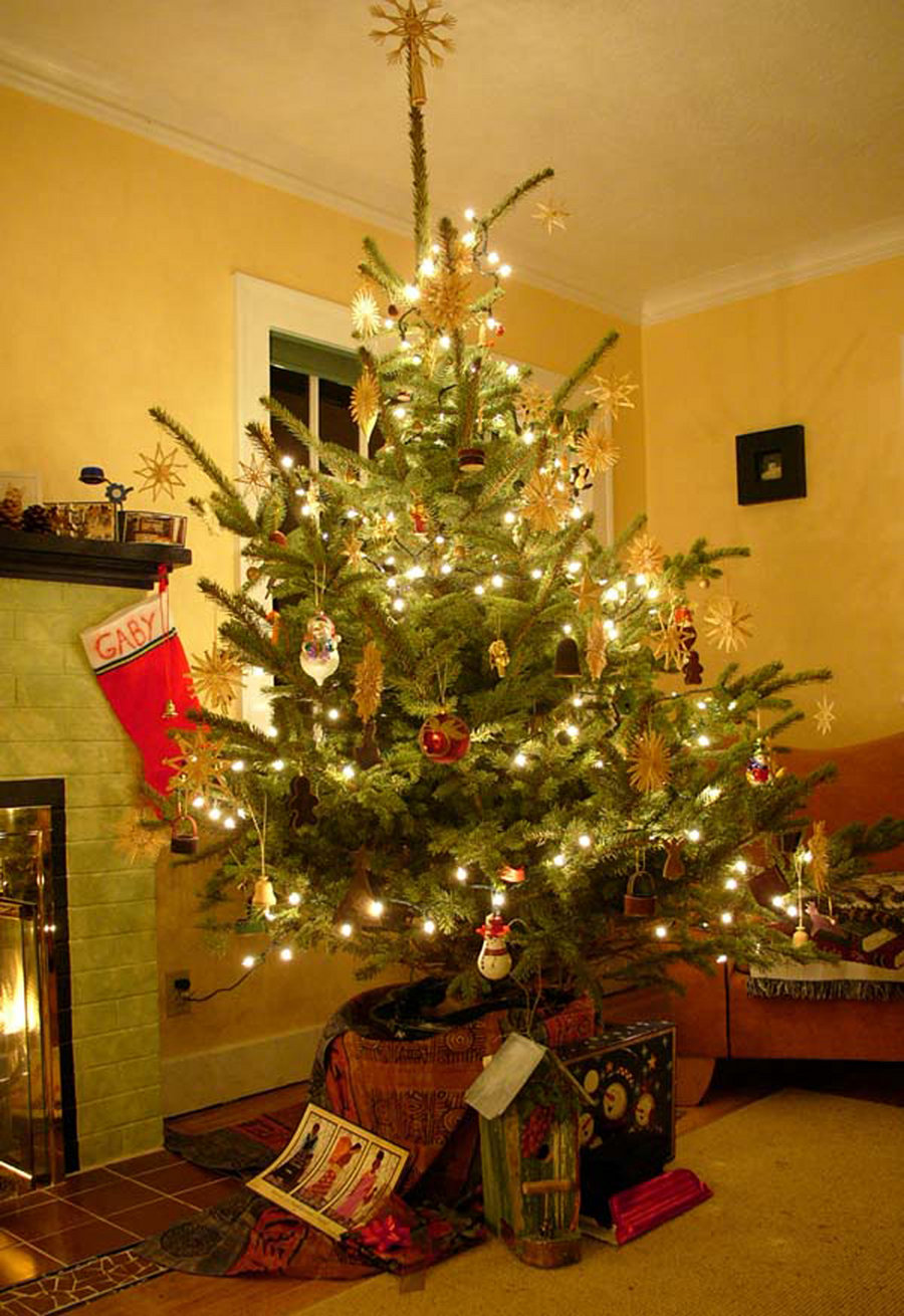 Tis the Season to Plant Live Christmas Trees…or not? – Treemendous ...