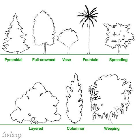 Knowing the specific tree form you need will help narrow your search for the ideal species.